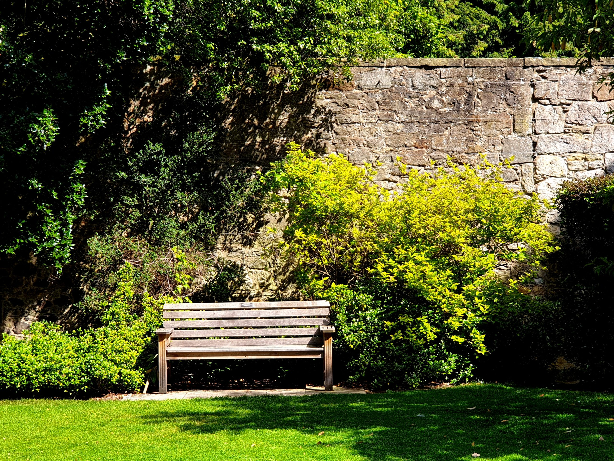 Wooden bench under the green tree during a sunny day