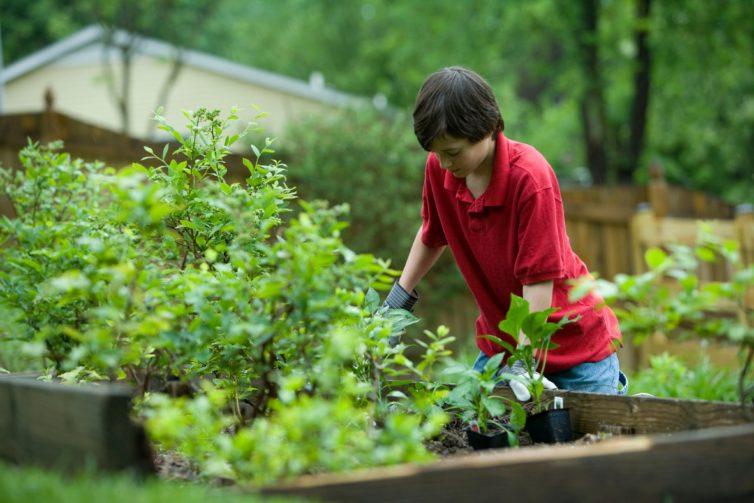 A boy in red T-shirt working in a garden