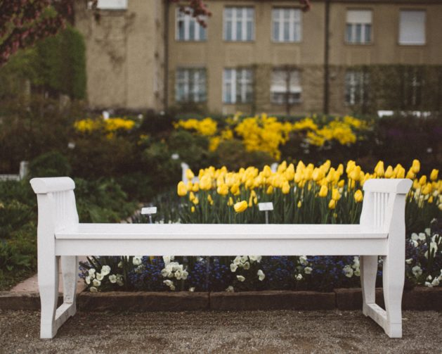 White plastic bench in front of the yellow flowers