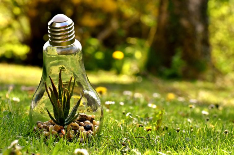 Light bulb with plants inside lying on the green grass