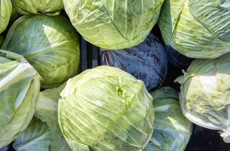 storing many cabbages