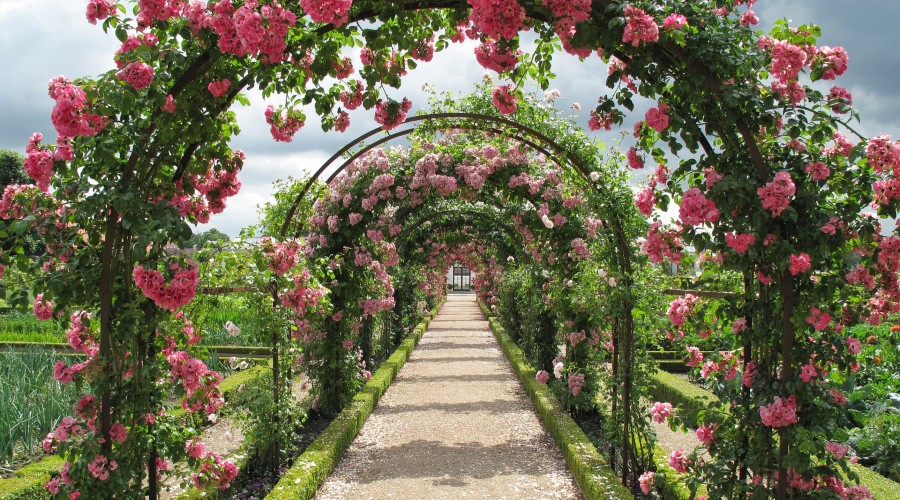Pathway with pink rose covered arches