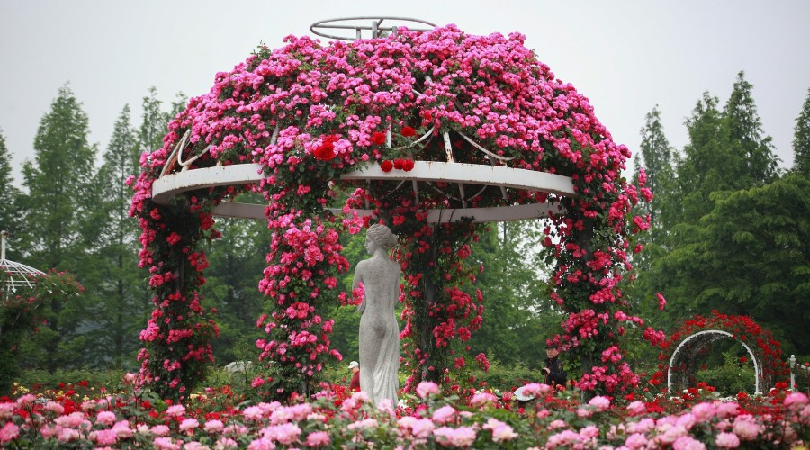 A pink and red rose garden with sculptures covered in roses