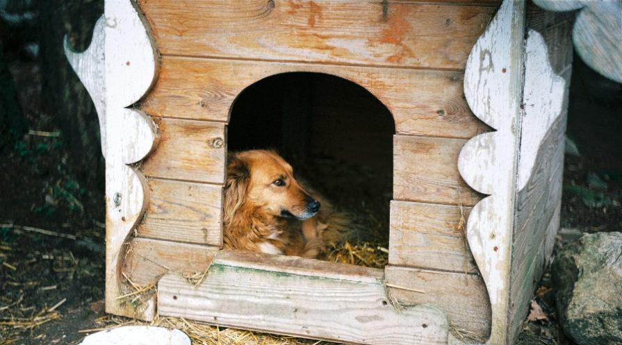 Dog sitting in dog kennel