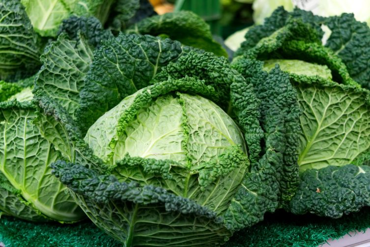 Savoy Cabbage with leaves