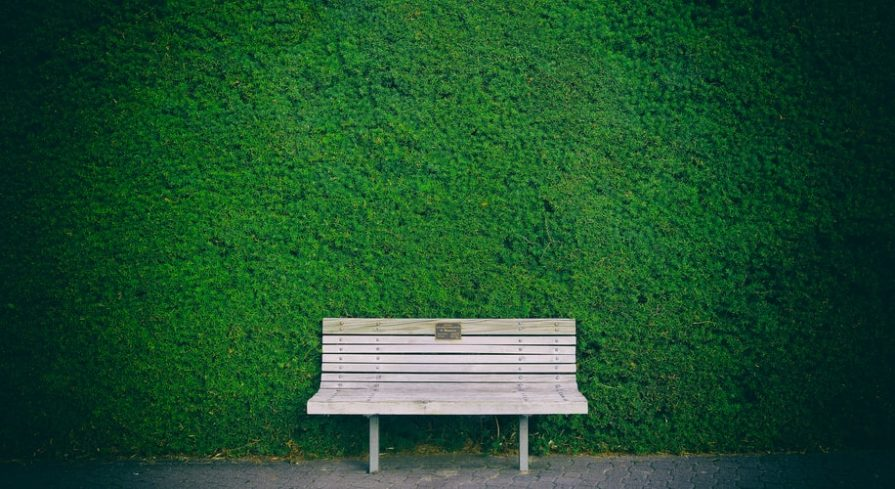 Wooden bench in front of the grass wall