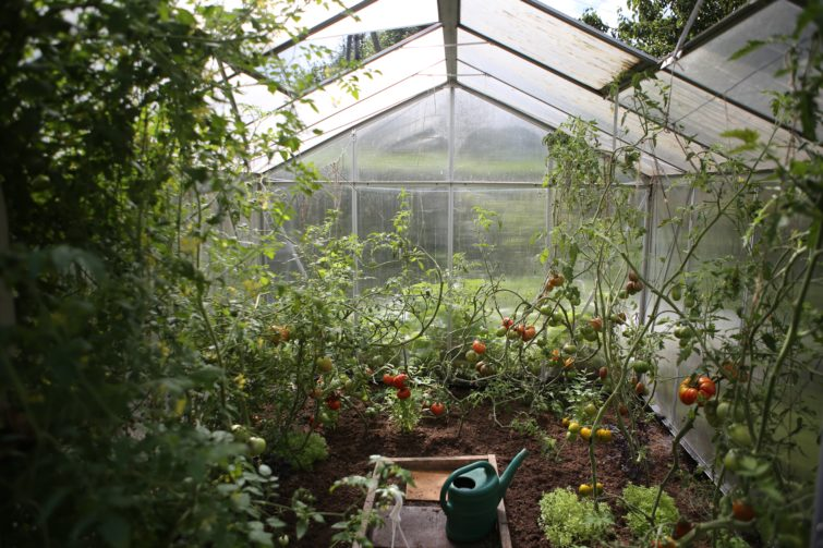 Gardenhouse full of plants