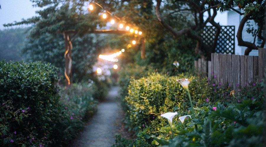 Empty walkway between shrubs under shiny garland