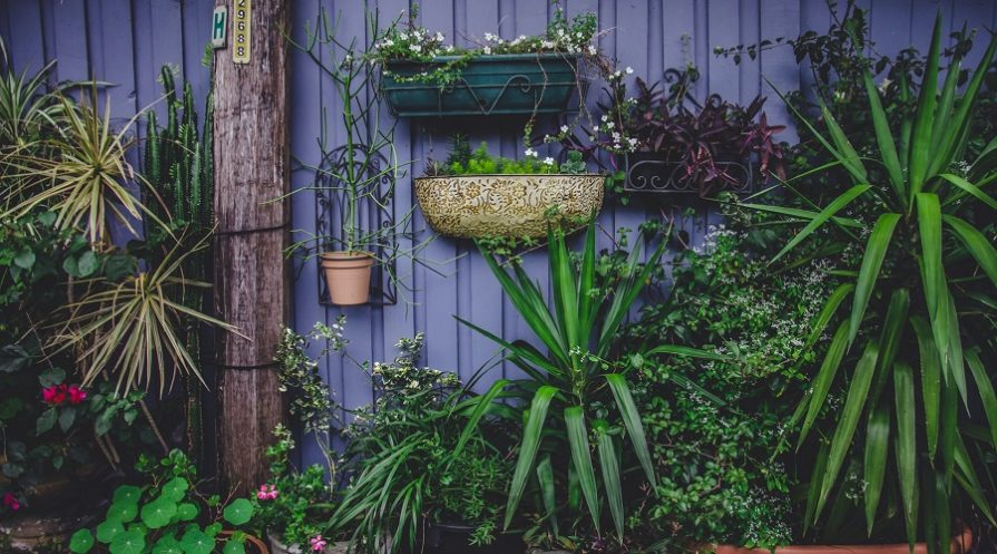 vertical garden on blue wall