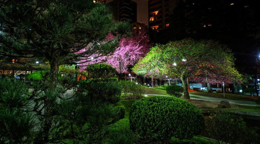 lit garden after sun set