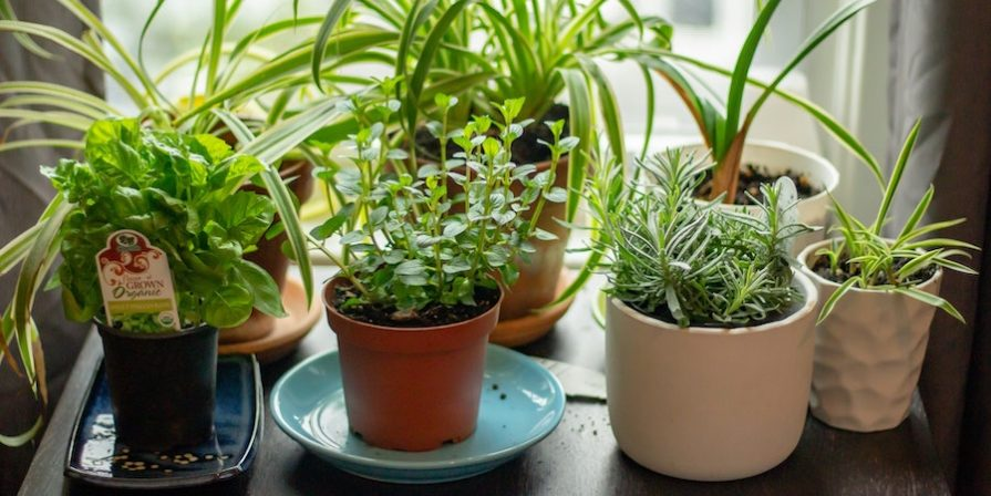 Herb garden on windowsill