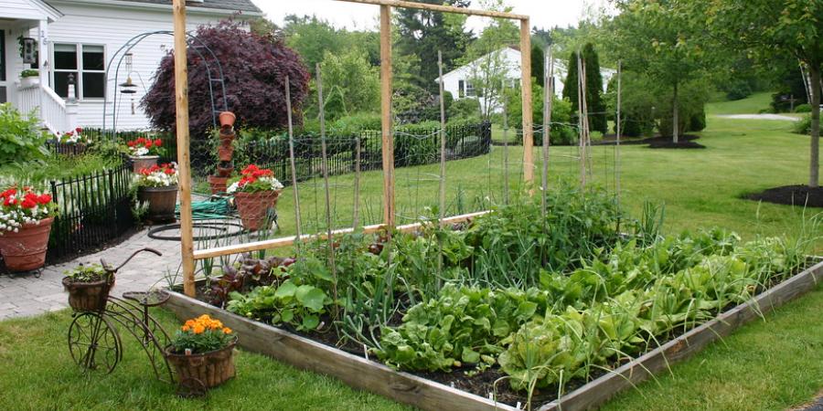Large Front Yard Vegetable Garden