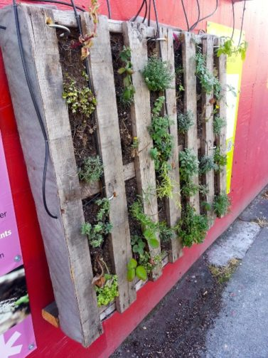 Pallet filled with plants, hanging on red wall