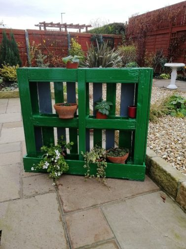 Vertical garden made from painted pallet