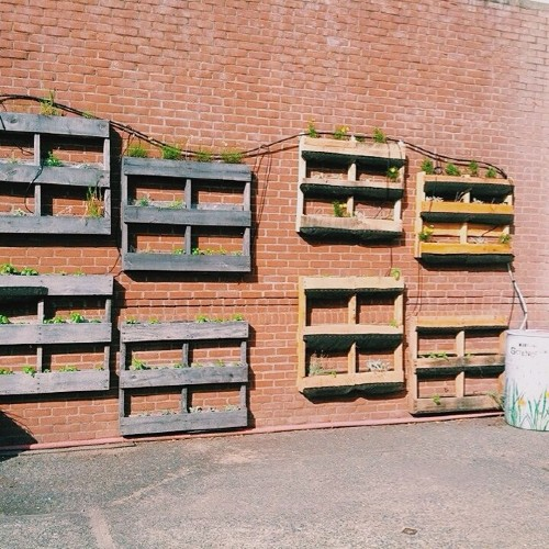 Multiple pallets on a wall, filled with plants