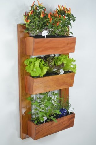 Lettuce and other plants growing in small hanging garden boxes