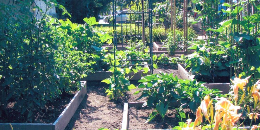 Tall Front Yard Vegetable Garden