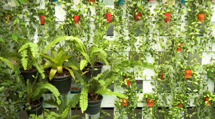 vertical garden with planters