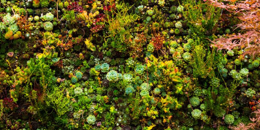 Vertical Garden Closeup