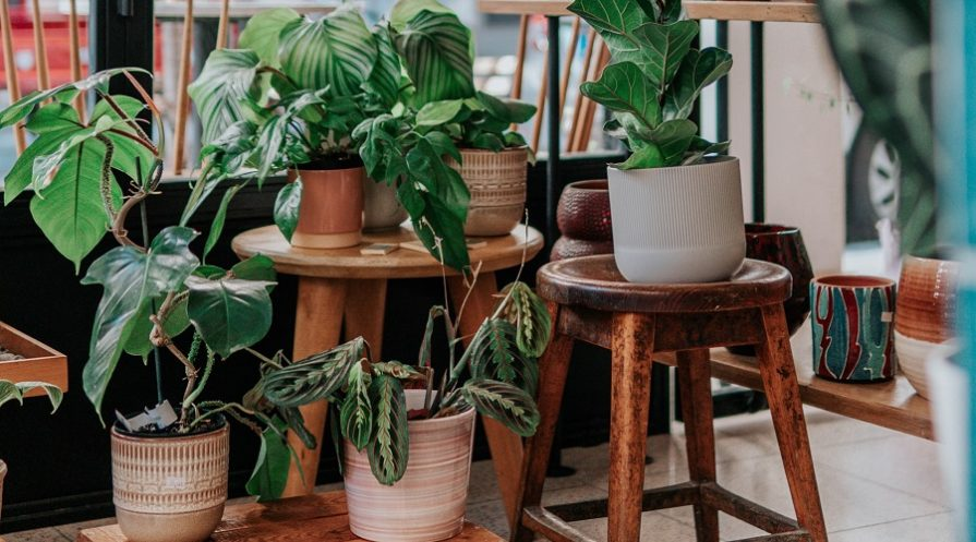 green potted plants drooping