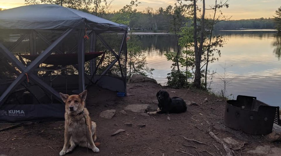 two dogs sitting outside of a screen shelter by a lake