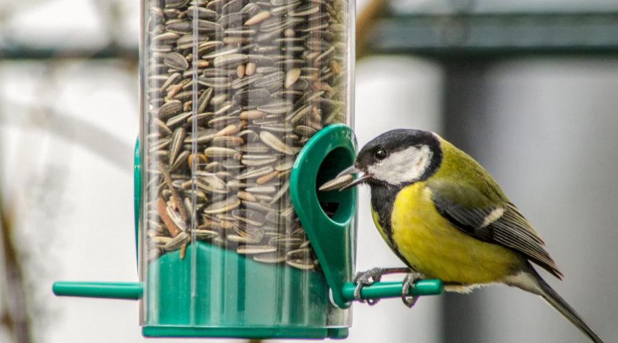 bird snacking on sunflower seeds in a bird feeder