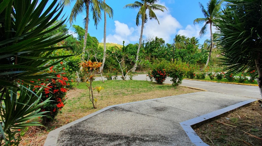 a driveway and walkway surrounded by tropical plants and palm trees