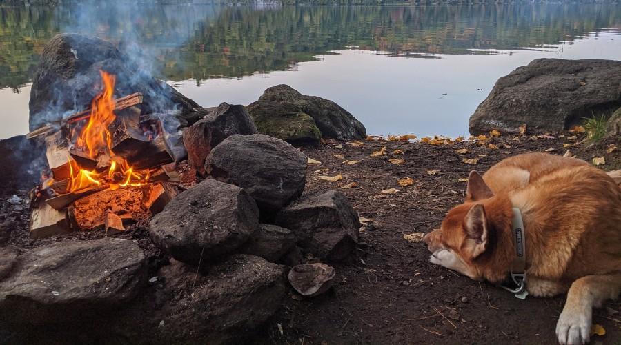 a dog laying next to a campfire