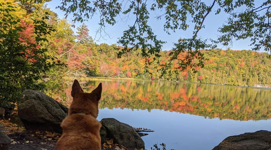 a dog sitting by the waterfront with fall colors in the distance