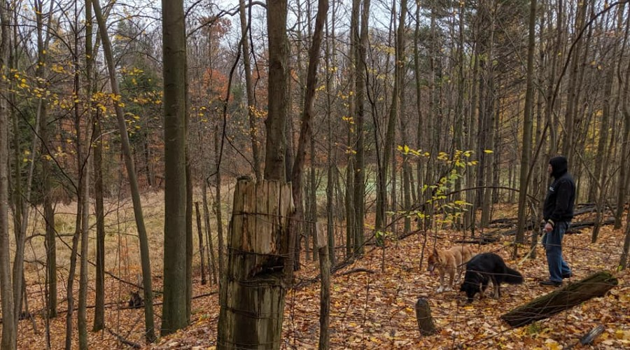 a man hiking with two dogs through the fallen leaves
