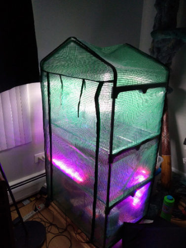 Indoor greenhouse, lit up with green, purple, and pink lights on inside