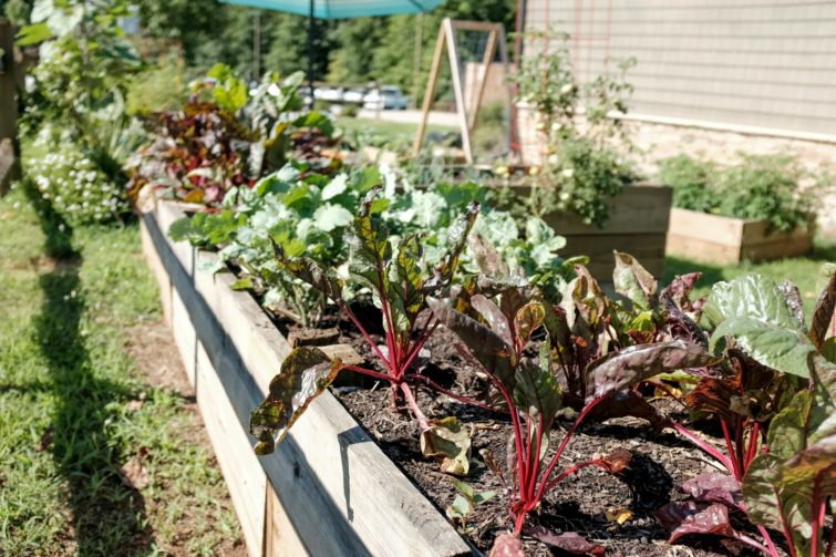 Vegetable garden with many vegetables