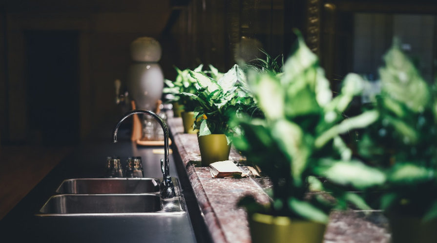 Plants on a kitchen counter top