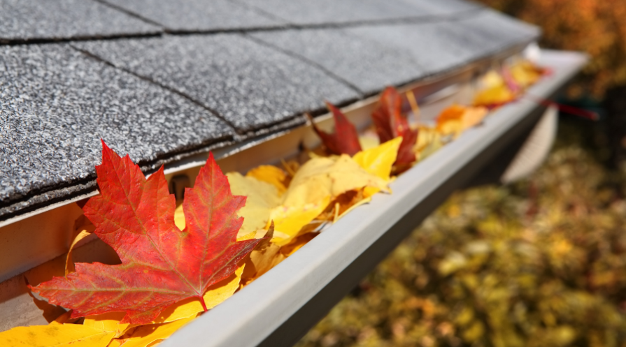Fall leaves in rain gutter