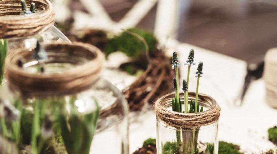 Herbs growing in mason type jars