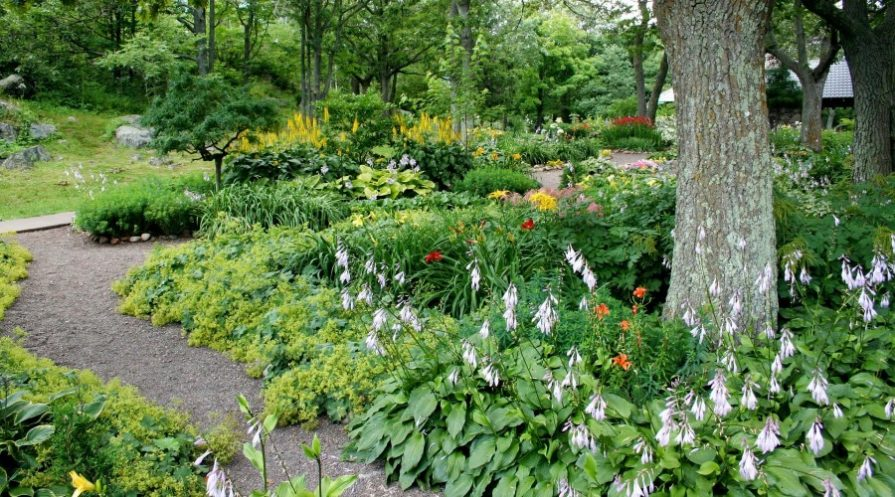 Garden path with flowers and trees lining the way
