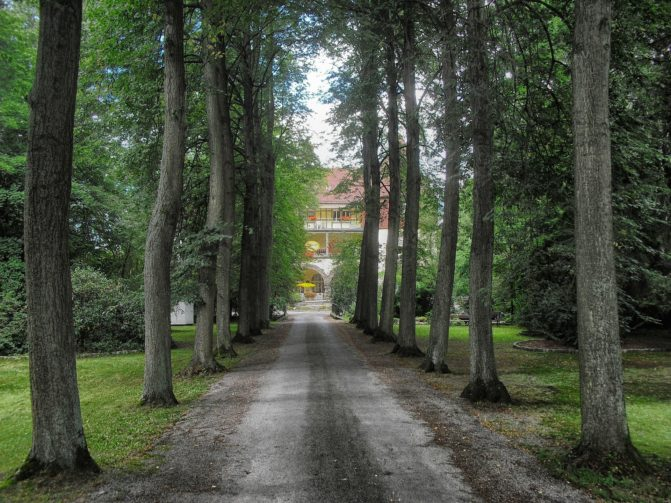 Forest path driveway