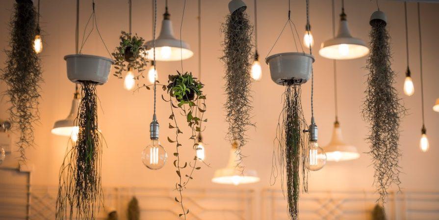 Hanging lights and hanging plants