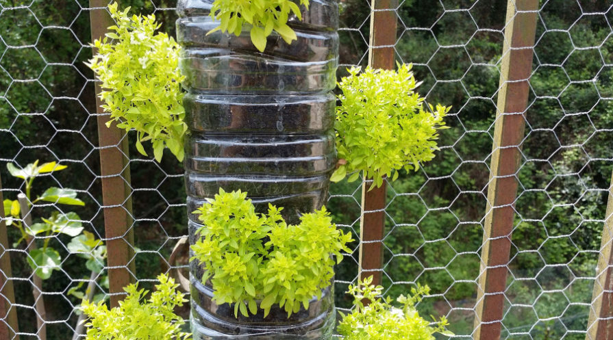 Plants growing out of recycled plastic bottle on chicken wire fence