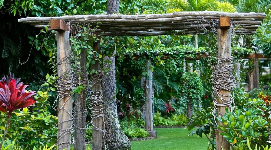 Rustic pergolas made of reclaimed wood, covered in vines