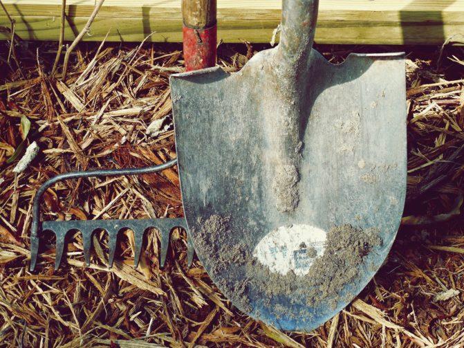 Old Shovel