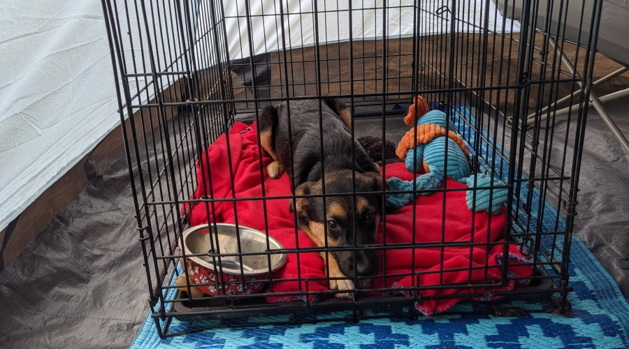 Puppy laying in a dog crate inside a tent