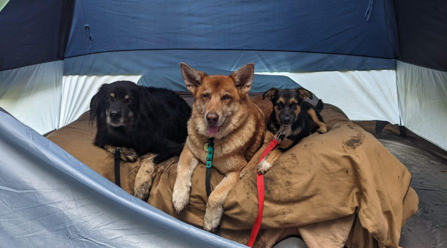 three dogs laying next to one another on a bed inside a camping tent