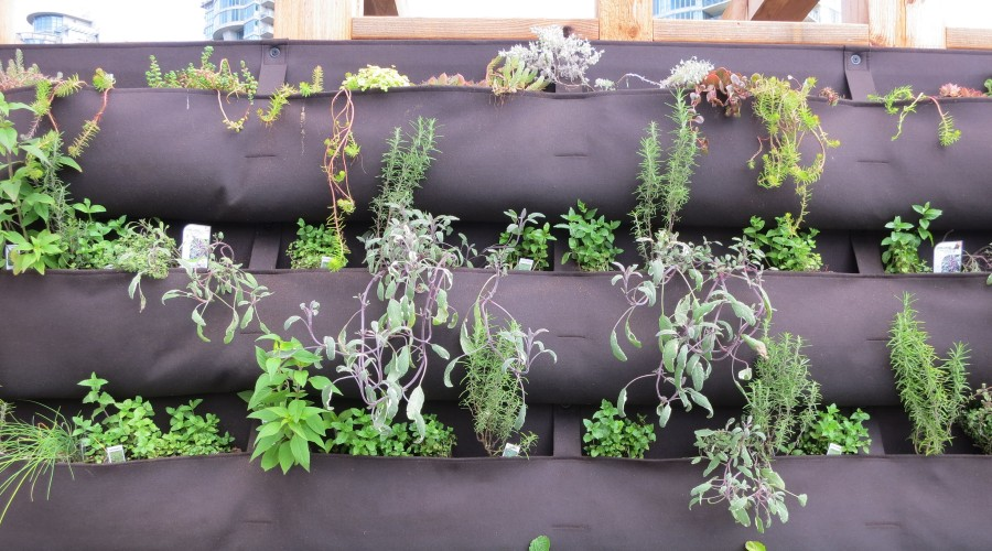 vertical garden in a series of hanging canvas bags