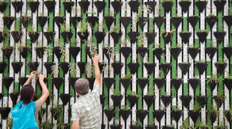 Two men examining plants at a vertical farm