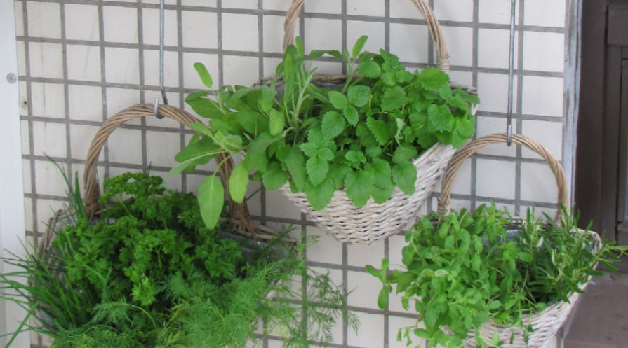 plants in baskets hanging from square mesh on wall