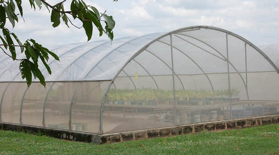 greenhouse with many plants