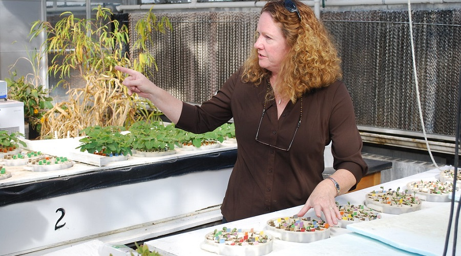seedlings growing in greenhouse