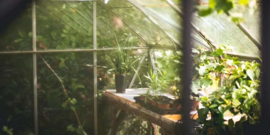 Greenhouse Through a Window
