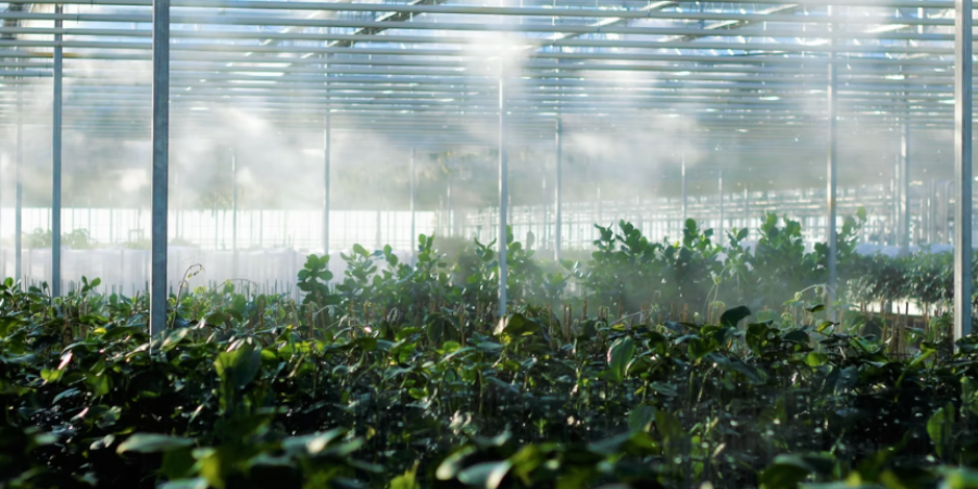 Greenhouse With Humidity